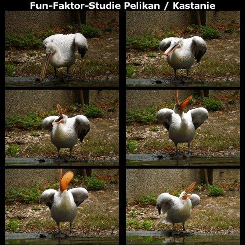 KA200809_Pelikan