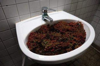 Waschbeckenbiotop
