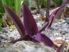 StM_Plants02