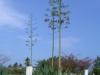 StM_Plants03